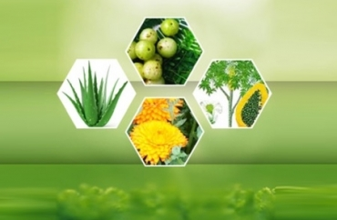 Certified Organic Herbals Manufacturer in Latvia