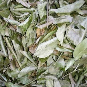 Curry Leaves Manufacturer