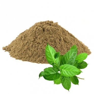 Gymnema Sylvestre Manufacturer in United Kingdom