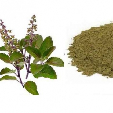 Vana Tulsi Powder Manufacturer in Italy