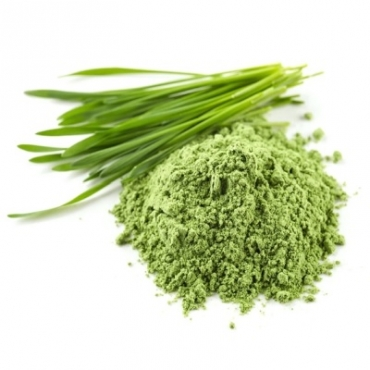 Wheat Grass Powder Manufacturer