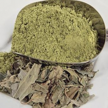 Ziziphus Leaf Powder Manufacturer